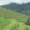 radicale terrassen in Byumba Rwanda